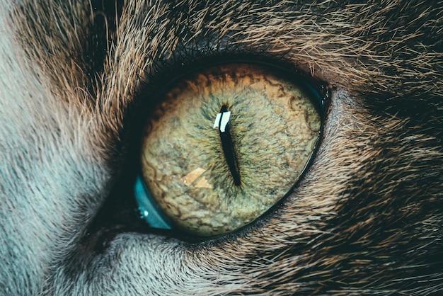 Bella ripresa macro del primo piano di un occhio di gatto - perfetto per lo sfondo