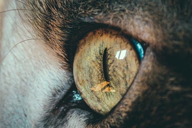고양이 눈의 아름다운 근접 촬영 매크로 샷-배경에 대한 완벽한