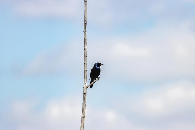 枝に青い旧世界のヒタキの美しいクローズアップ