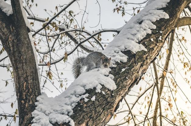 겨울에 눈 덮인 나무에 다람쥐의 아름다운 근접 촬영