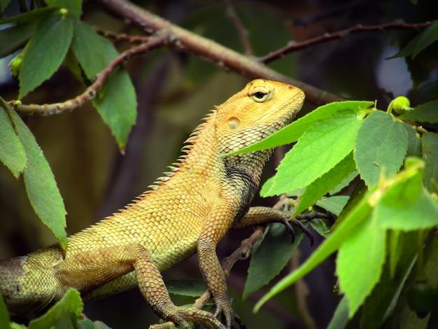 곤충 비행을 기다리는 정원 도마뱀의 아름 다운 근접 촬영 사진