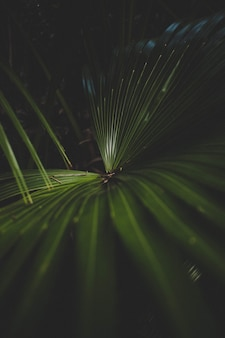 Beautiful closeup shot of a green palm plant with a dark background