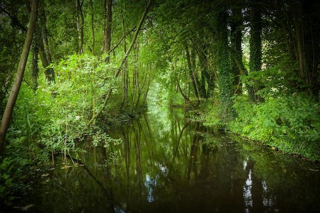 Красивая съемка крупного плана озера в парке kralingse bos в роттердаме, нидерландах