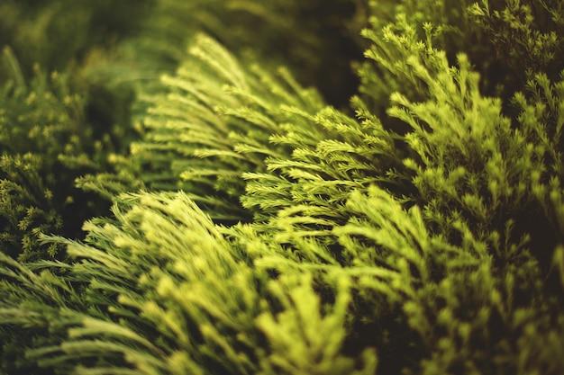 フィールドの風の下で手を振っている緑の植物の美しいクローズアップショット