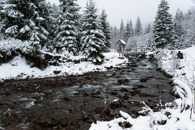 Beautiful cloudy winter landscape in mountains carpathians