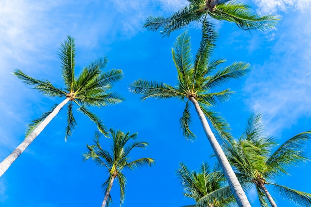 Beautiful coconut palm tree on blue sky
