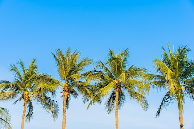 青い空に美しいココナッツ椰子の木