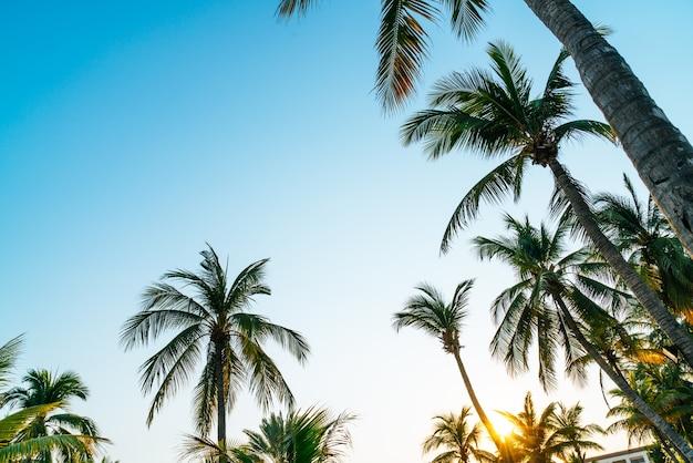 青い空と美しいココヤシの木