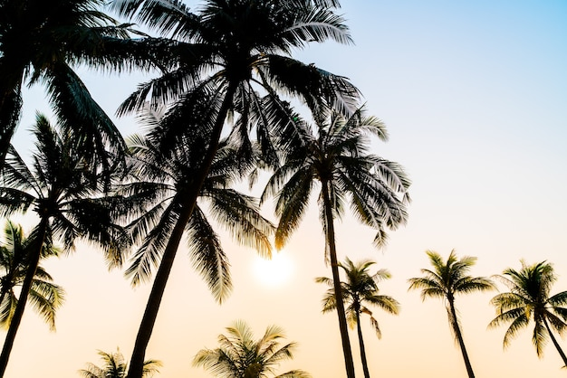 Beautiful coconut palm tree with sunset