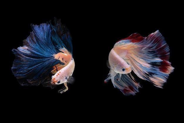 Beautiful colbeautiful colors