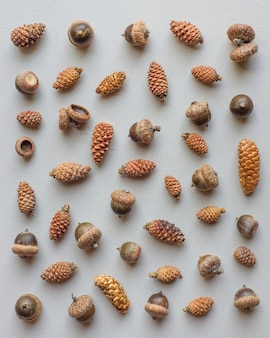 Beautiful collection of different sized pinecones and large acorns