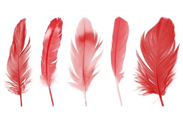 흰 벽에 고립 된 아름 다운 컬렉션 붉은 적갈색 깃털