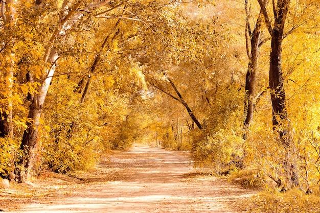 곡선 비포장 도로가 있는 가을의 아름다운 색색의 숲 풍경