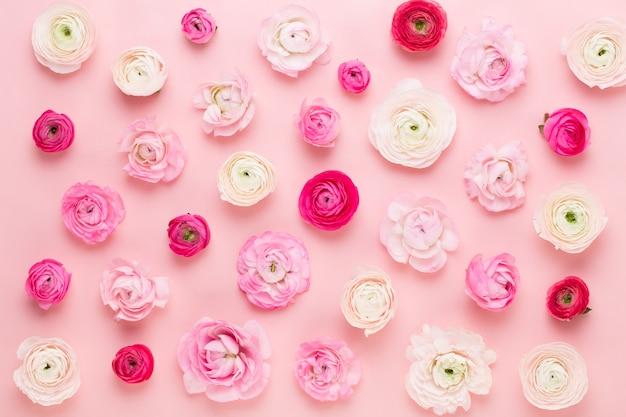 Красивые цветные лютик цветы на розовом фоне. весенняя открытка.