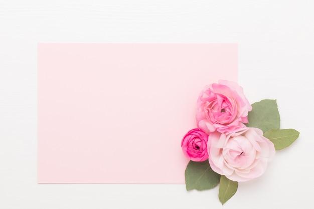 Красивые цветные цветки лютика на белом фоне. весенняя открытка.