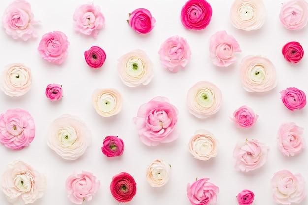 白い背景の上の美しい色のラナンキュラスの花。バレンタインデーのグリーティングカード。