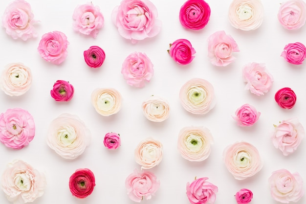 Красивые цветные цветы лютик на белом фоне