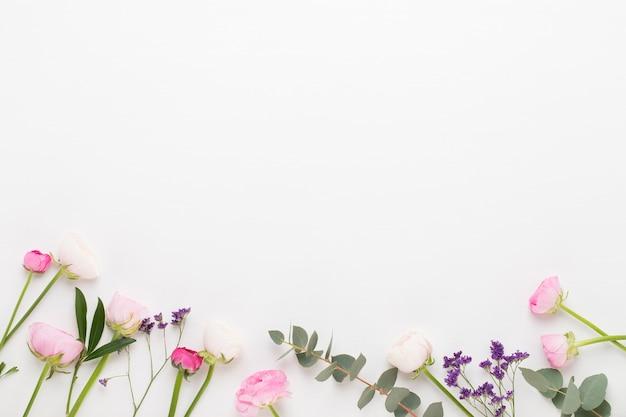 Красивые цветные цветы лютик на белом