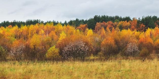 아름 다운 화려한가 숲, 흐린 비오는 날씨. 다 색된 나무와 풍경. 자연의 구성