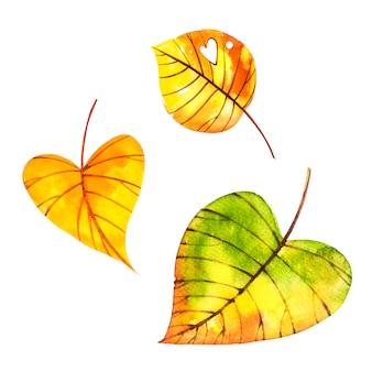白で隔離される美しい色鮮やかな紅葉。水彩イラスト。