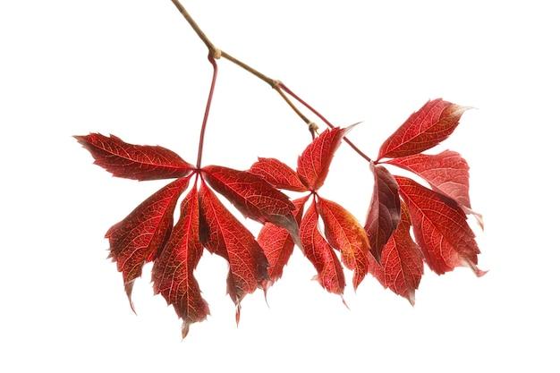 白い表面に美しい色とりどりの紅葉