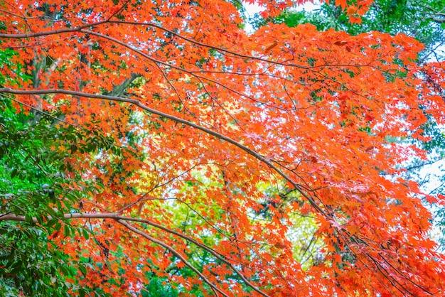 美しいカラフルな紅葉