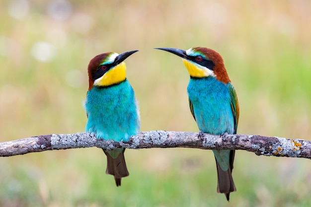 Beautiful colorful birds perched on a branch