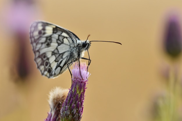 Beautiful colorful butterfly sitting on flower in nature. summer day with sun outside on meadow. col