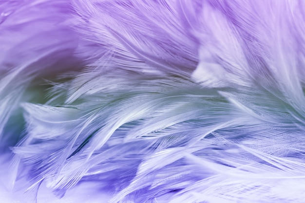 背景の美しいカラフルな鶏の羽の質感