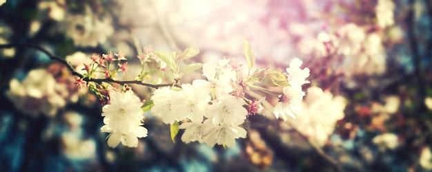 Bella sfumatura colorata di sfondo del fiore. orizzontale. concetto di primavera. tonificante. messa a fuoco selettiva.