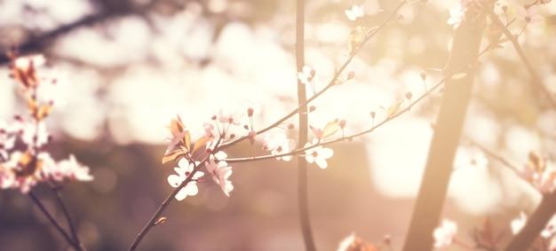 아름 다운 화려한 꽃 배경 흐림. 수평. 봄 개념. 토닝. 선택적 초점.