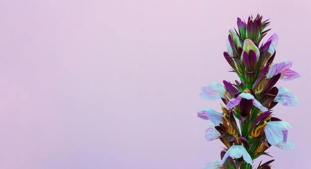 Красивый красочный цветок на розовой стене. фон