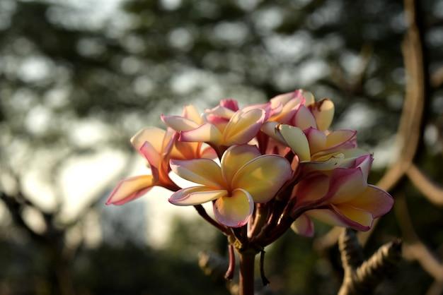 Красивые красочные цветы цветут.