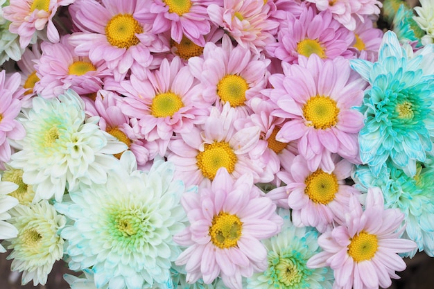 Beautiful colorful flowers as background