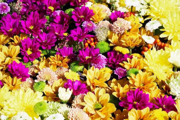 아름다운 화려한 꽃. 화려한 국화 꽃. 평면도