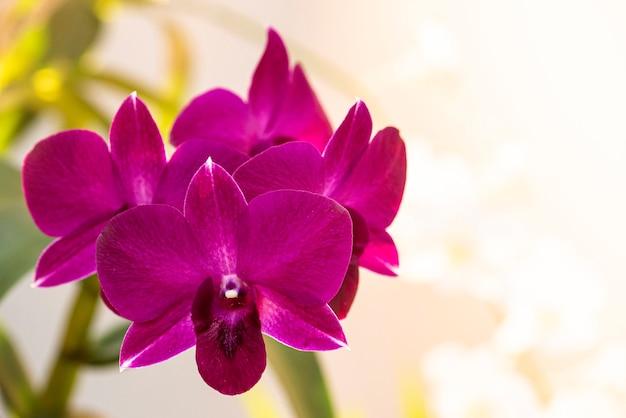 아름 다운 화려한 난초. 핑크색.