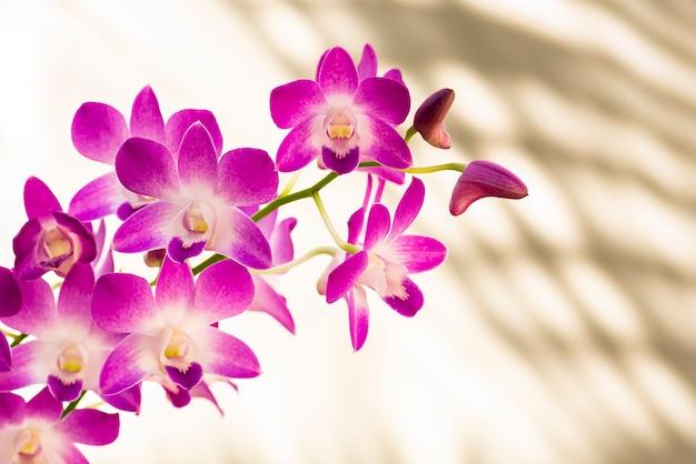 아름 다운 화려한 난초. 흰색과 분홍색