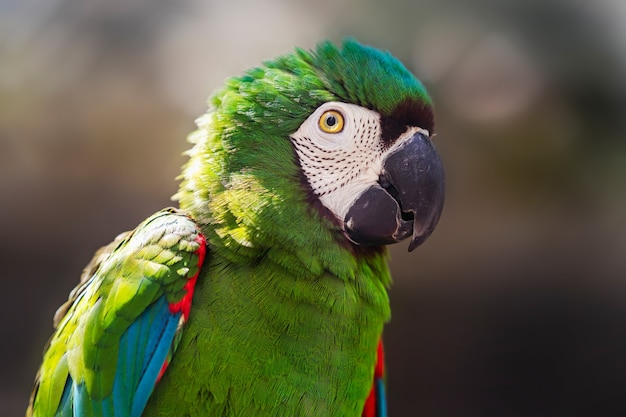 Beautiful colorful parrot bird in zoo