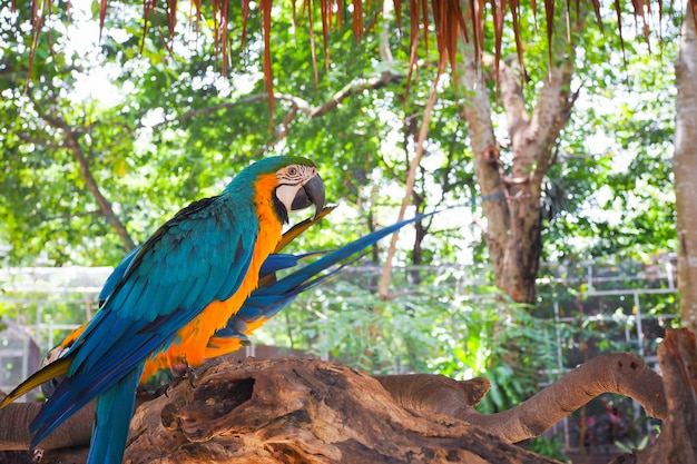 Beautiful colorful parrots on the old branch