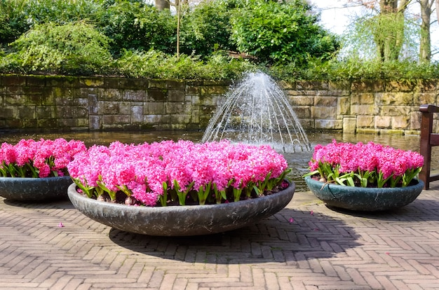 オランダオランダの公園の美しい色とりどりの春の花