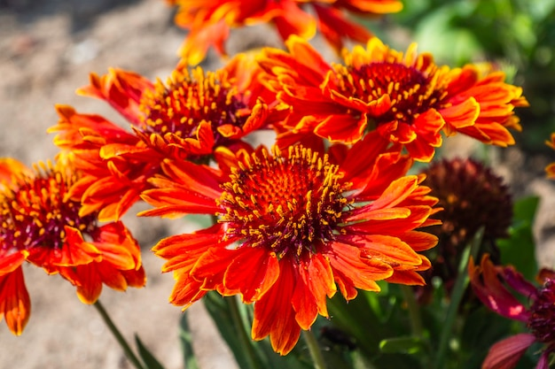 Beautiful colorful summer flowers blooming in garden