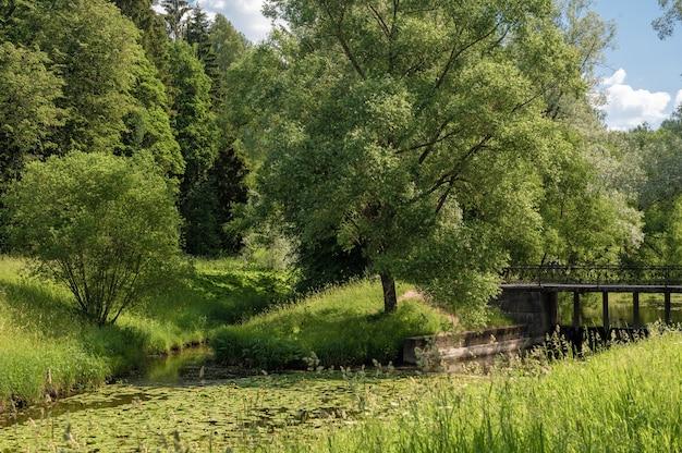 공원의 호수나 강이 있는 아름다운 다채로운 여름 봄 자연 경관은 햇빛에 나무의 녹색 잎과 전경의 길로 둘러싸여 있습니다.