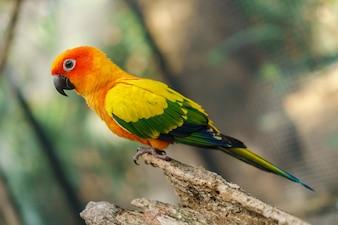 木の枝に美しいカラフルな太陽のconureのオウムの鳥