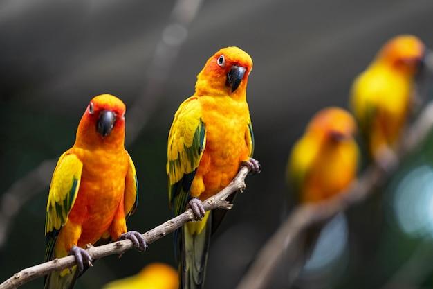 Beautiful colorful sun conure parrot birds