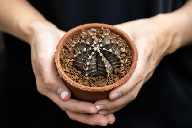 Красивый красочный кактус gymnocalycium mihanovichii