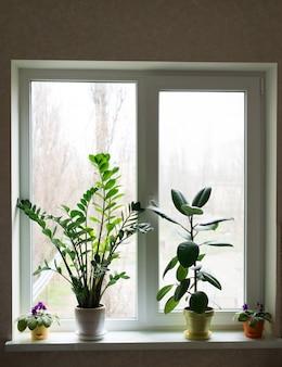 아파트의 창에 서있는 꽃의 아름다운 구성