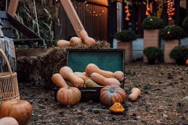 村の中庭のカボチャと秋の野菜と花の美しい構成
