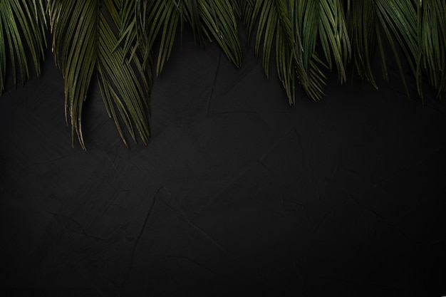 Beautiful composition of palm leaves with copyspace