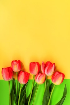 Beautiful composition of spring tulips. red tulips flowers on green background.
