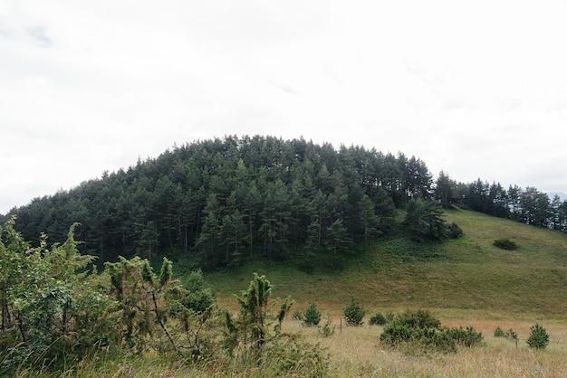 岩場の美しい針葉樹林。野生動物。